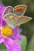 Mariposa-web-1.jpg
